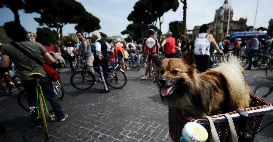 Cachorro descansa em cestinha de bicicleta enquanto ciclistas participam de um protesto por infraestrutura melhor para bicicletas, em Roma, na Via dei Fori Imperial, perto do Coliseum
