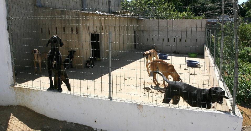 Sete cães, mantidos em canil na empresa LSA Reciclagem Carvalho situada no bairro de Valéria, em Salvador (Bahia), atacaram e mataram o funcionário Domingos Jurandi Xavier de Jesus, de 24 anos, que chegava para a jornada de trabalho por volta das 21h35 de segunda. O corpo do vigia só foi encontrado na manhã desta terça