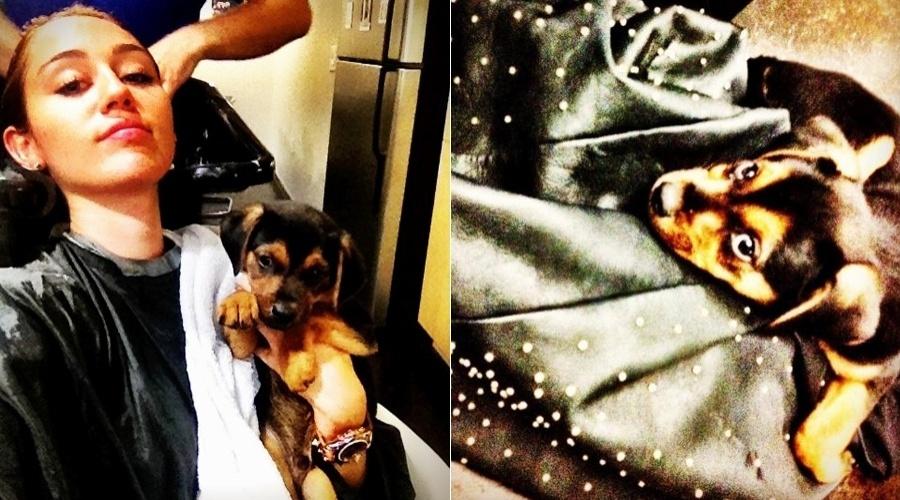 Miley Cyrus vai a salão de beleza e leva seu novo cãozinho (2/5/12)