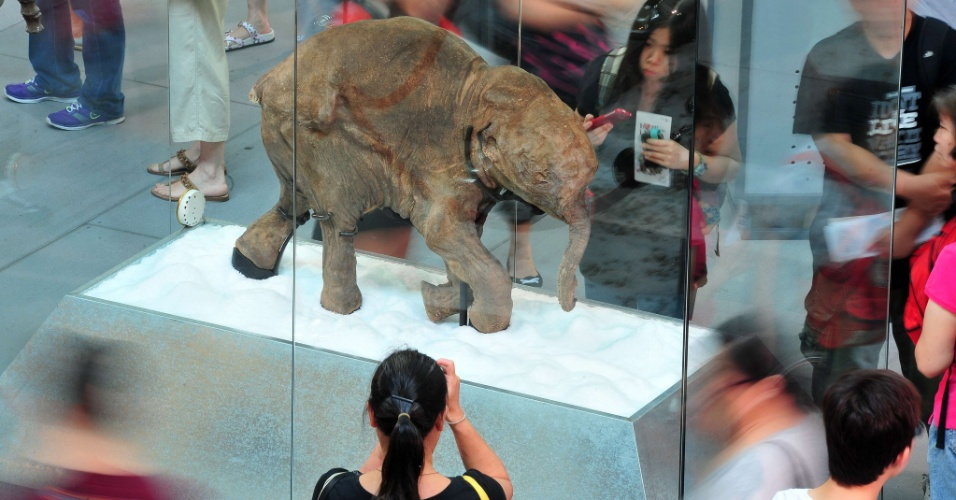 4.mai.2012 - Carcaça do bebê mamute melhor preservado do mundo é exposta em shopping de Hong Kong, na China
