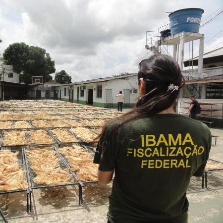 A anulação de atos tomados por fiscais do Ibama libera três grandes embarcações de pesca industrial - Nelson Feitosa/Ibama