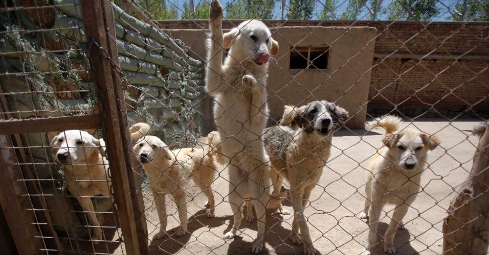 Animais no Nowzad, abrigo para animais em Cabul, no Afeganistão. O abrigo, criado pelo ex-soldados Pen Farthing, abriga cães e gatos resgatados durante a guerra e que estão sendo adotados por solados americanos e britânicos