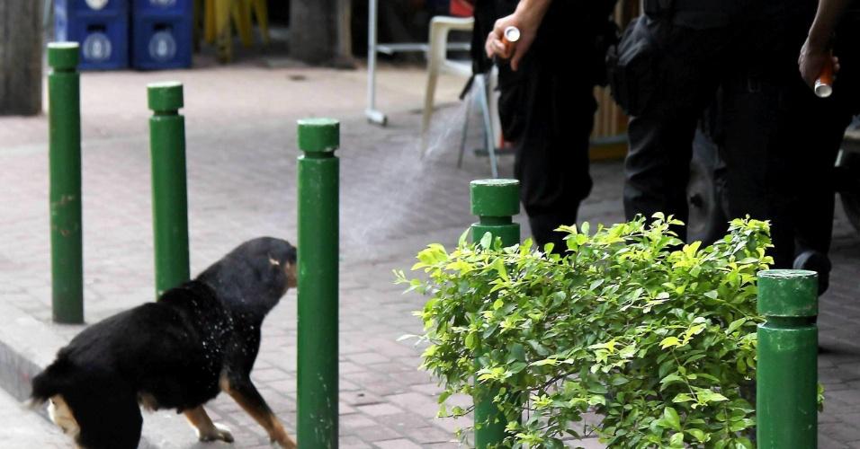 6.mai.2012 - Policial usa spray de pimenta contra cachorro na favela da Rocinha, no Rio