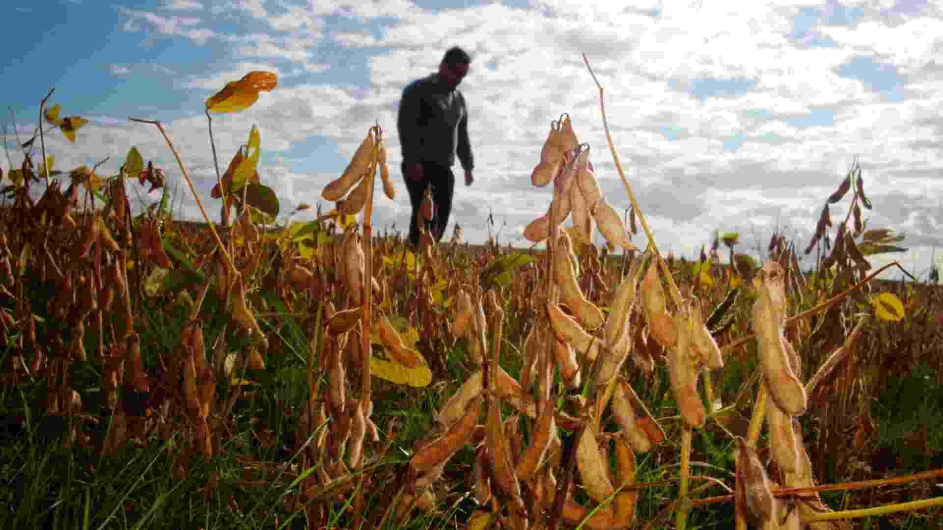 7.mai.2012 - A colheita de soja é escassa em função da seca no RS - Roberto Witter/Agência RBS