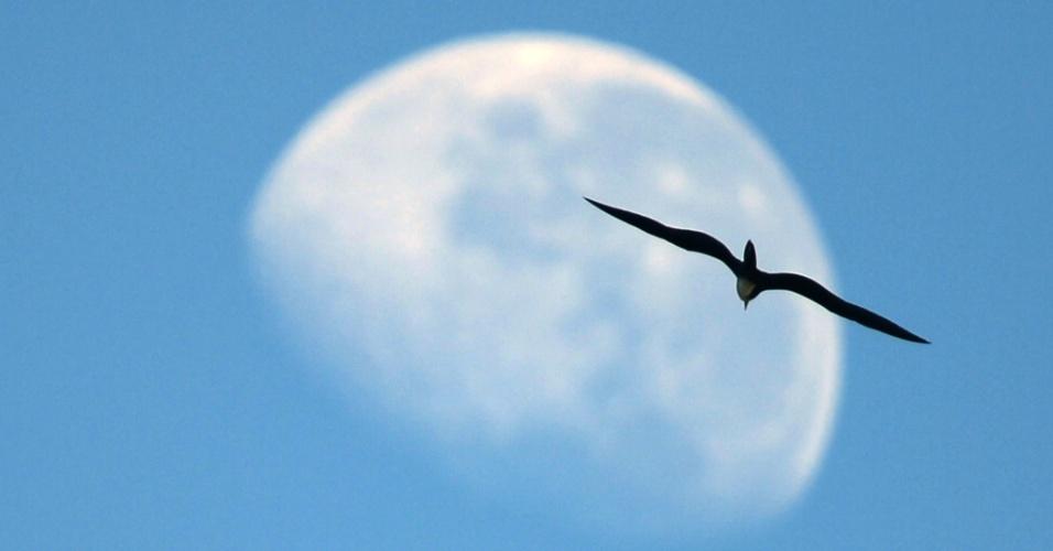 10.mai.2012 - Pássaro voa na direção da lua na praia de Ipanema, no Rio de Janeiro