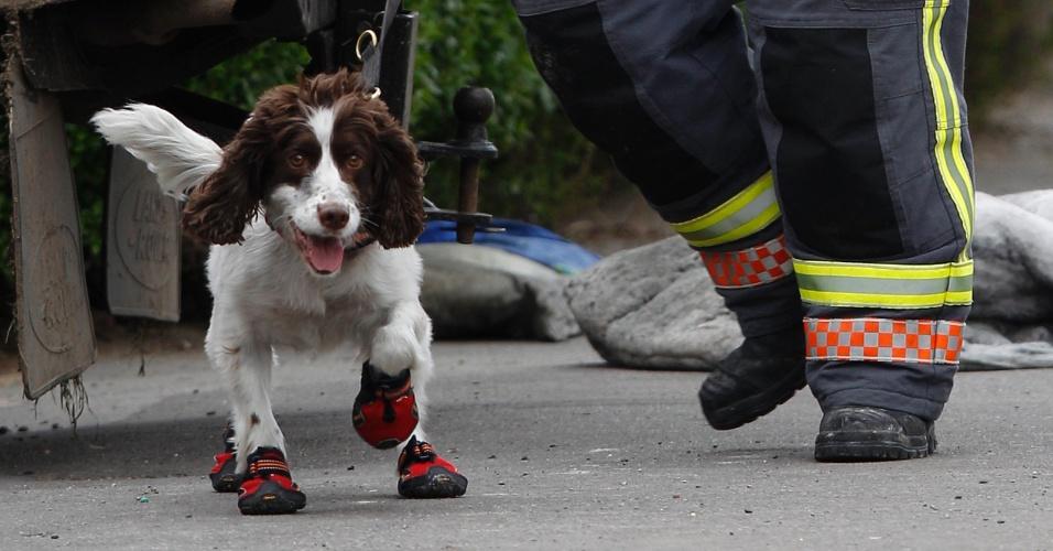 11.mai.2012 - Bombeiro leva um cão farejador para dentro da casa onde cinco crianças morreram após um incêndio, em Derby, na Inglaterra (Reino Unido). Uma mulher foi presa suspeita de ser responsável pelo fogo