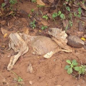 Ossada de cão é encontrada em canil abandonado no interior de SP; animais teriam morrido de fome