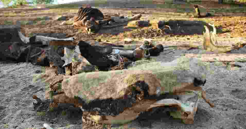 17.mai.2012 - O riacho do Brás, em Poço Redondo (SE), virou cemitério de animais com a maior seca já registrada no Nordeste em décadas - Beto Macário/UOL