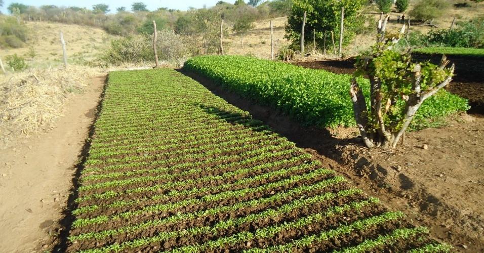 18.mai.2012 - Flagrante feito no dia 9 de maio na cidade de Exu, no sertão pernambucano, mostra que a água desviada de abastecimento era usada para irrigar hortaliças; operações durante a estiagem no Nordeste têm encontrado a irregularidade em fábricas e fazendas