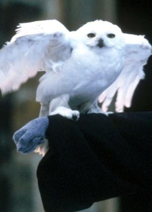 A coruja do bruxo Harry Potter, Edwiges,  fez com que muitos fãs da série adotassem a ave como bicho de estimação - Reuters