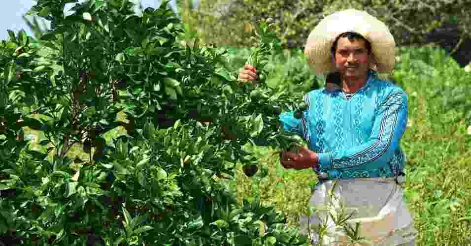 21.mai.2012 - Domingos Rito Filho, 33, celebra colheita no projeto Califórnia, que garante a plantação em Canindé do São Francisco (SE) com irrigação, mesmo durante a seca - Beto Macário/UOL