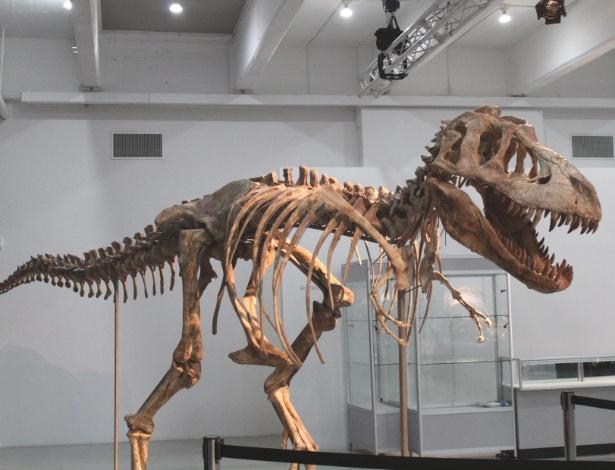 """Foto de tiranossauro """"bataar"""", parente asiático do temido """"tiranossauro rex"""", supostamente vendido por US$ 1 milhão em Nova York (21/5/12) - EFE"""
