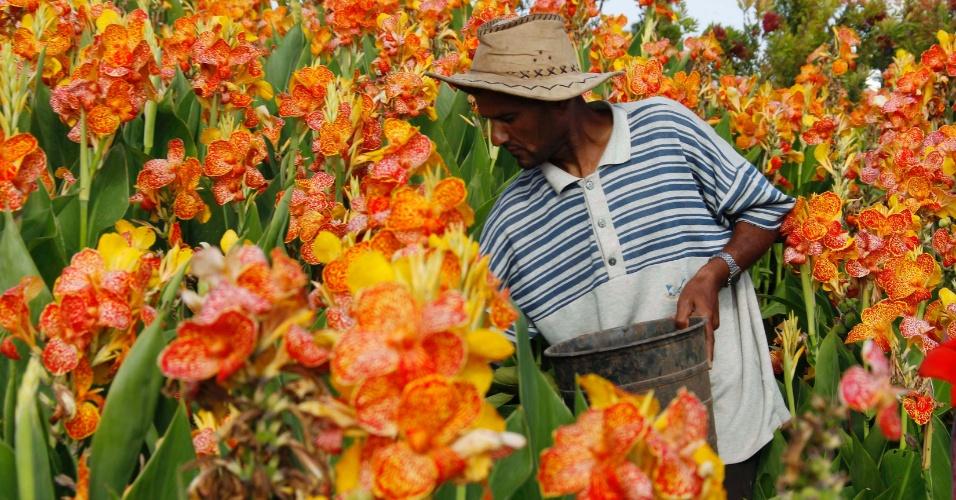 23.mai.2012 - Agricultor sírio vivendo no Líbano trabalha em plantação de flores em Qasmiyeh, no norte do Líbano