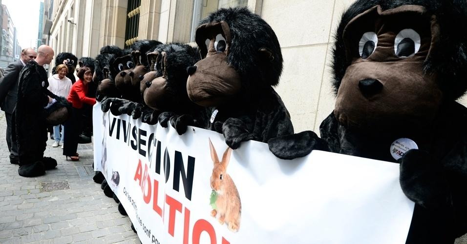 23.mai.2012 - Ativistas do grupo que defende o fim de experimentos com animais protestam, disfarçados de macacos, em frente ao gabinete do vice-ministro de assuntos sociais e de saúde pública nesta quarta-feira (23), em Bruxelas, na Bélgica. O grupo afirma que o ministro não está honrando suas promessas em relação a proibir os experimentos em animais
