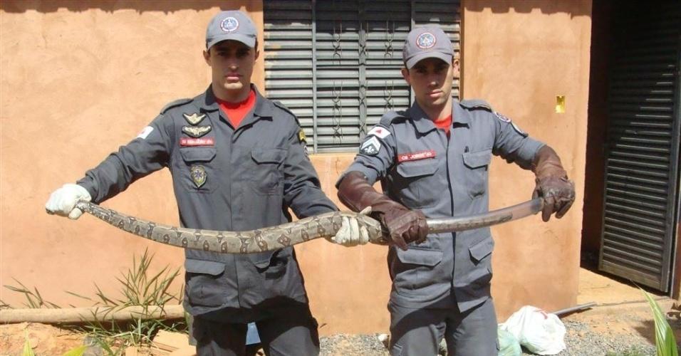 25.mai.2012 - Bombeiros capturaram uma jiboia de quase 2 metros de comprimento em uma casa localizada no bairro São Geraldo II, na cidade de Montes Claros (MG)