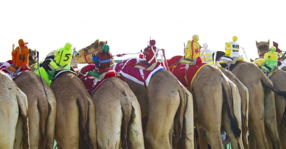 14.fev.2012 - Camelos cavalgados por robôs participam de uma corrida de seis quilômetros durante a 12ª Corrida Internacional de Camelos de Kebd, no Kuwait. Desde 2005, jóqueis ''de verdade'' foram substituídos pelos robozinhos após pressão internacional: muitas crianças eram traficadas da Índia e Paquistão para cavalgarem os animais. Agora, remotamente, homens transmitem ordens aos robôs com chicotes
