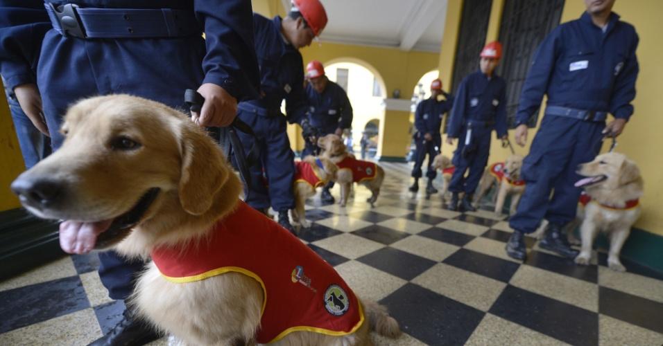 31.mai.2012 - Equipes de resgate seguram cães farejadores durante exercício de simulação de terremoto nesta quinta-feira (31), em Lima, Peru