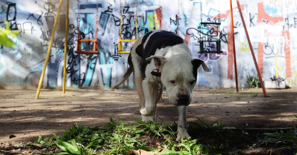 4.jun.2012 - Um pitbull preso na Praça Viena, na zona norte de Porto Alegre, até a noite de domingo, desapareceu. O cão estava preso em meio a gangorras e balanços, em uma área de lazer acostumada a receber crianças nos fins de semana