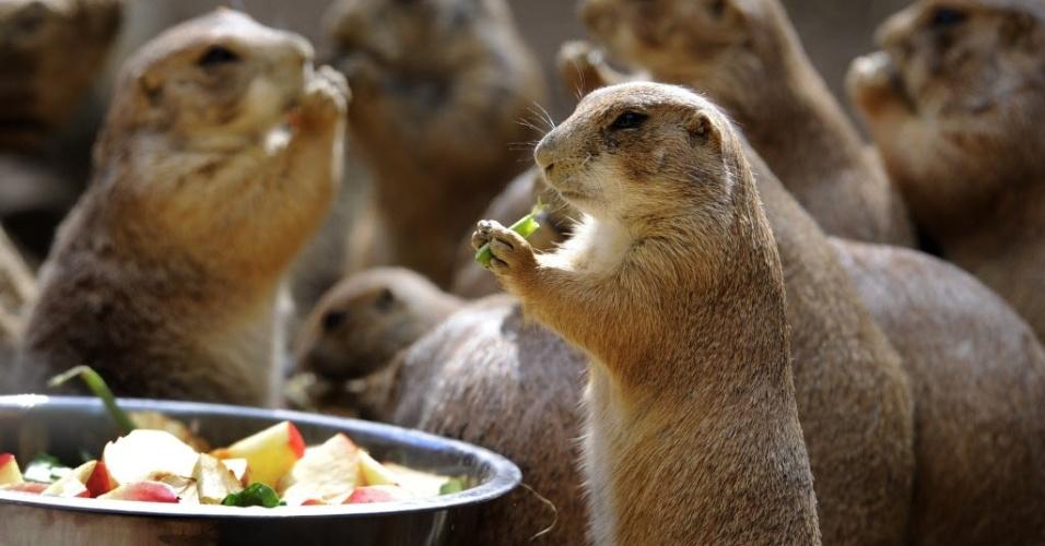 05.jun.2012 - Roedores se alimentam no zoológico de Amneville, na França