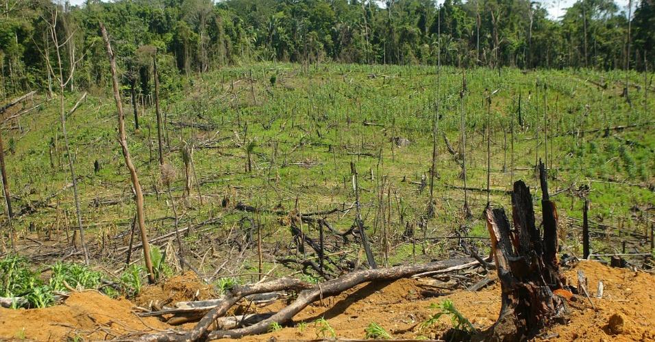 fev.2005 - Floresta destruída para criação de gado em Anapu, no Pará