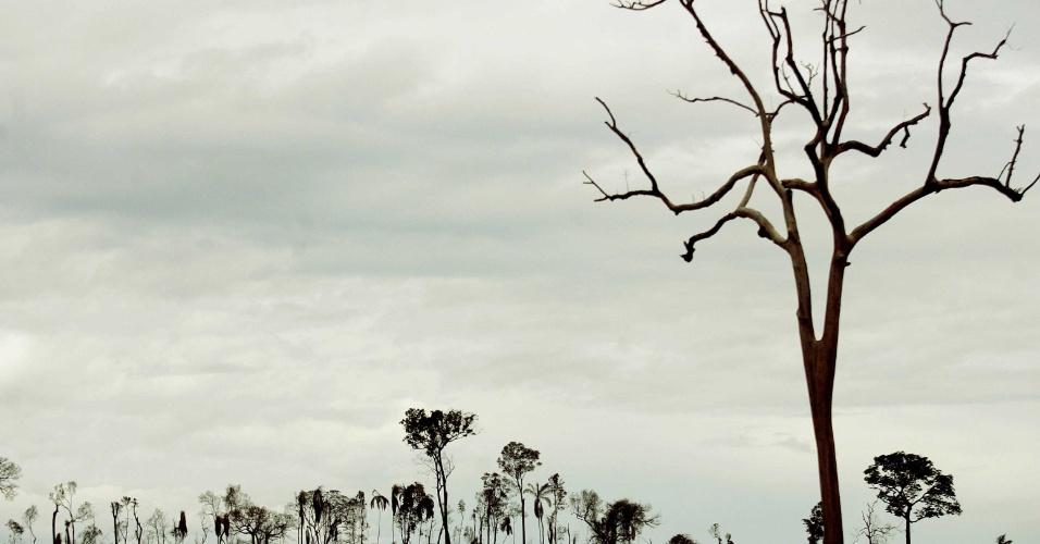 jan.2008 - Área de floresta amazônica desmatada no município de São Félix do Xingu, no Estado do Pará