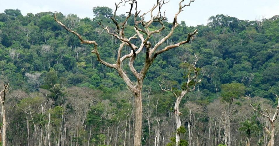 jan.2008 - Árvore seca em uma área desmatada na entrada do Parque Estadual Cristalino, entre os municípios de Alta Floresta e Novo Mundo, no Mato Grosso