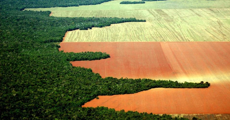 jun.2005 - Grandes extensões de floresta convertidas para a agricultura em Nova Ubiratã