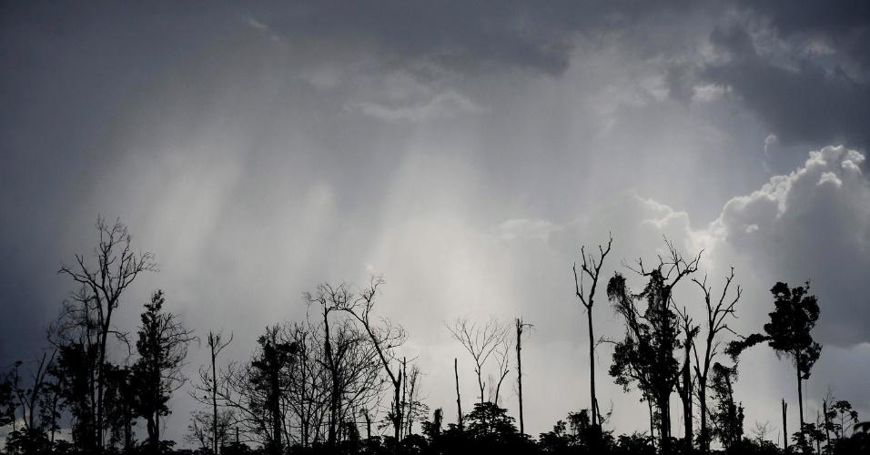 mai.2012 - Resquícios de floresta amazônica ao longo da rodovia PA 150, no Pará