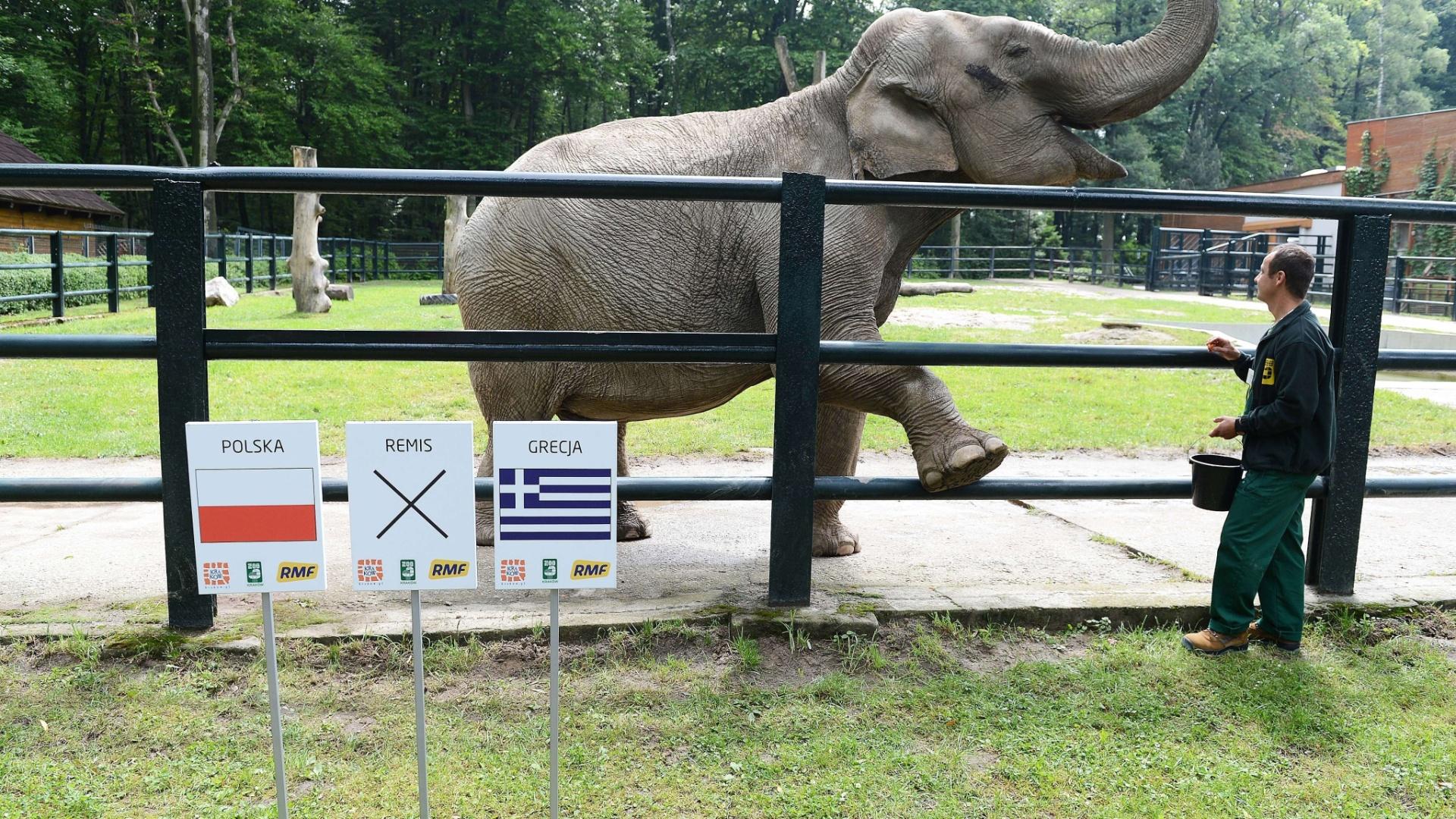 Citta tem 33 anos e já acertou que o Chelsea venceria o Bayern de Munique na final da Liga dos Campeões. A elefanta vive no zoológico da Cracóvia, na Polônia, e seu método de previsão é bem simples: ela escolhe um melão.
