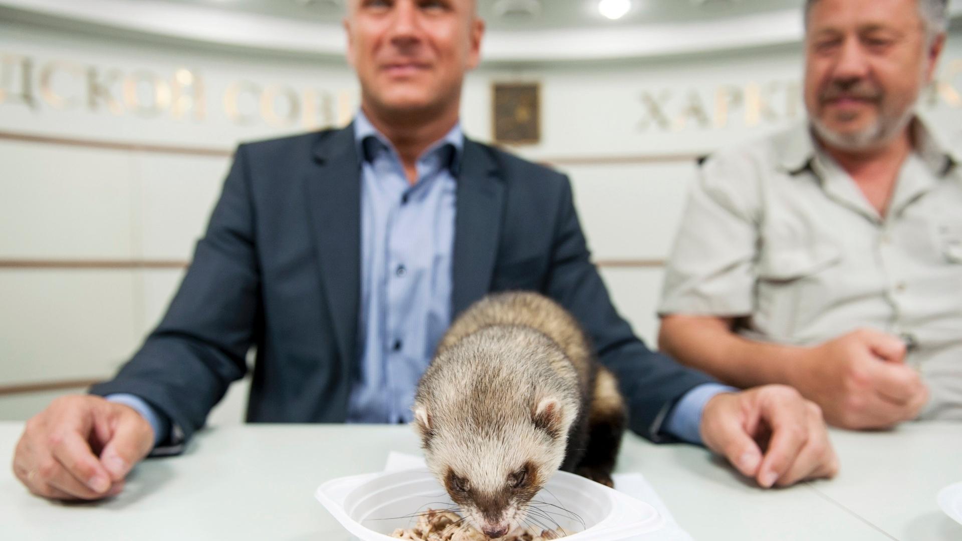 Fred, que também tem o apoio das autoridades de sua cidade, terá sempre que escolher uma tigela de comida nos jogos da Ucrânia, e suas previsões serão feitas em público