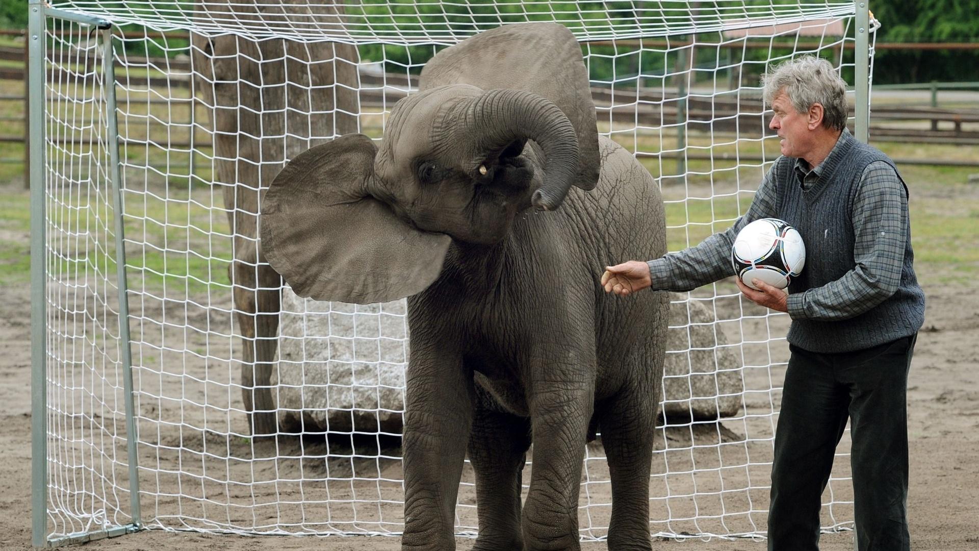 Outra elefanta candidata a vidente na Euro 2012 é Nelly, que reside na Alemanha e também não é nenhuma novata, apesar de bem mais jovem do que Citta. Em 2011, Nelly previu que o Japão venceria os Estados Unidos na final da Copa do Mundo feminina.