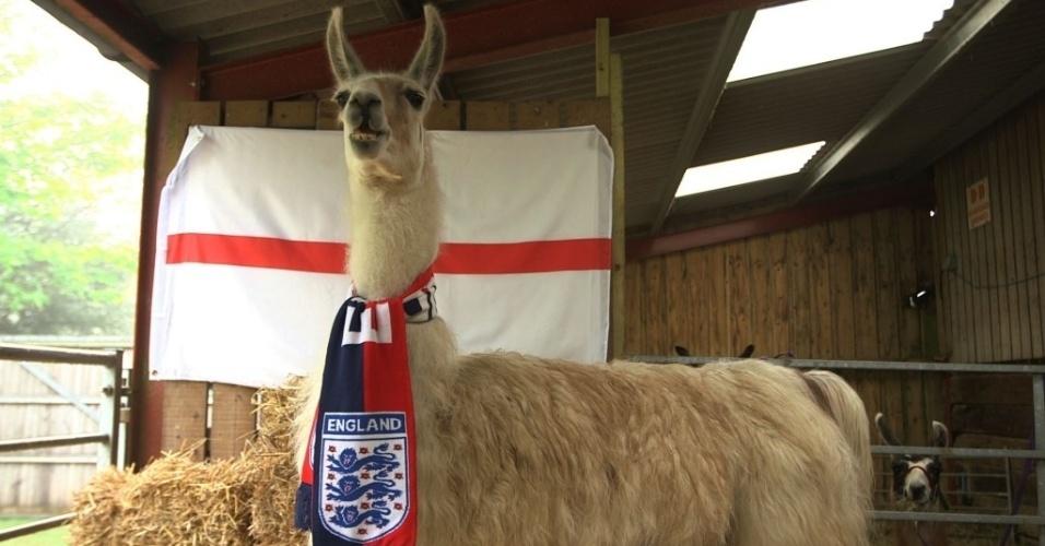 Para encerrar a lista, o único inglês dos videntes da Euro, a lhama Nicholas. A seu favor, o bicho engraçado tem o acerto na final da Liga dos Campeões. Agora, ele terá a missão de prever os resultados da Inglaterra.
