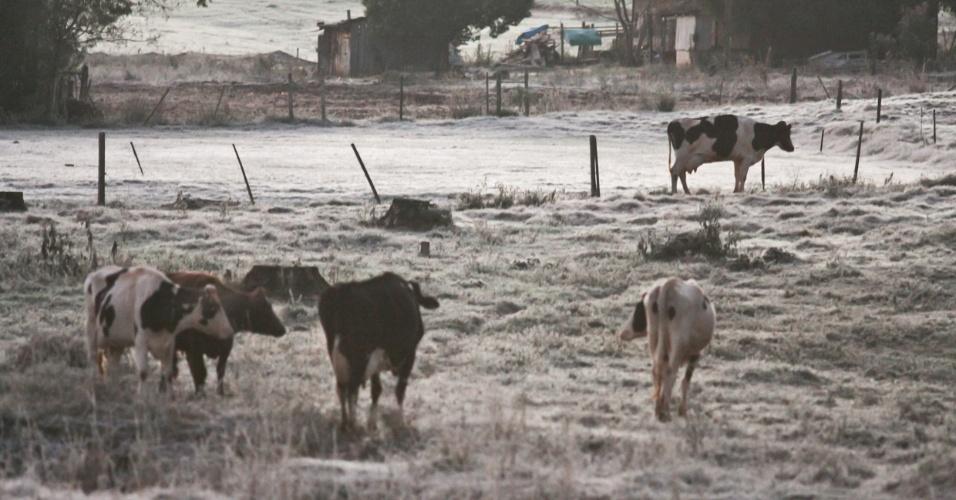 9.jun.2012 - Campos cobertos de geada em Ibirubá (RS)