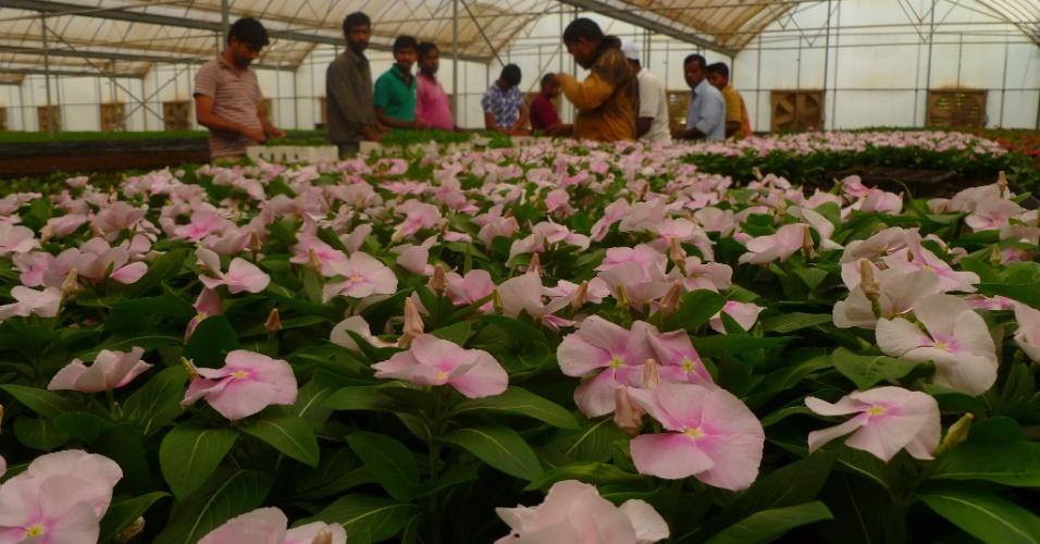 Duas grandes fazendas produzem flores no Qatar para paisagismo. O lucro é de 4,5 milhões de dólares por ano