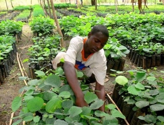 Moçambique leva para a Rio+20 a experiência da comunidade de carbono  N´hambita: o projeto dissemina técnicas de agricultura sustentável entre mil famílias de pequenos produtores que vivem na reserva de Gorongosa, província de Sofala. Com a preservação do ecossistema local, a comunidade de agricultores ainda vende créditos de carbono e reinveste os lucros no negócio