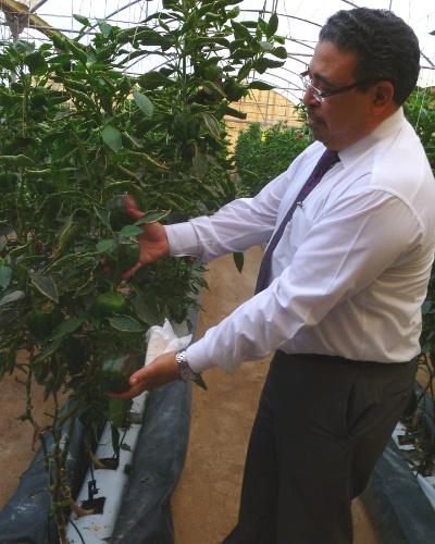 Os vegetais, menos lucrativos que as flores, são produzidos por hidroponia, sem a necessidade de solo, que não existe no país. Com o financiamento do Banco de Desenvolvimento do Qatar, os preços dos vegetais plantados aqui são competitivos no mercado local