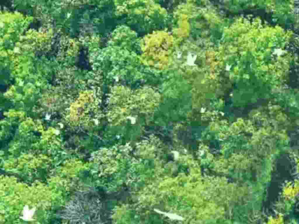 Parque Nacional Yasuní, na Amazônia Equatoriana - Reprodução/YasuníITT