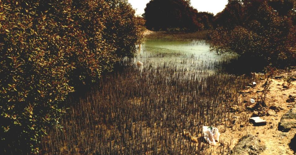 Qatar tem uma pequena margem de mangues.Apesar da intenção de preservar o bioma, pudemos ver lixo no local. A Unicef tem um projeto de instalação de mangues flutuantes, para aumentar o bioma que permite crescimento de vegetação com água salgada e ainda retira CO2 do ar
