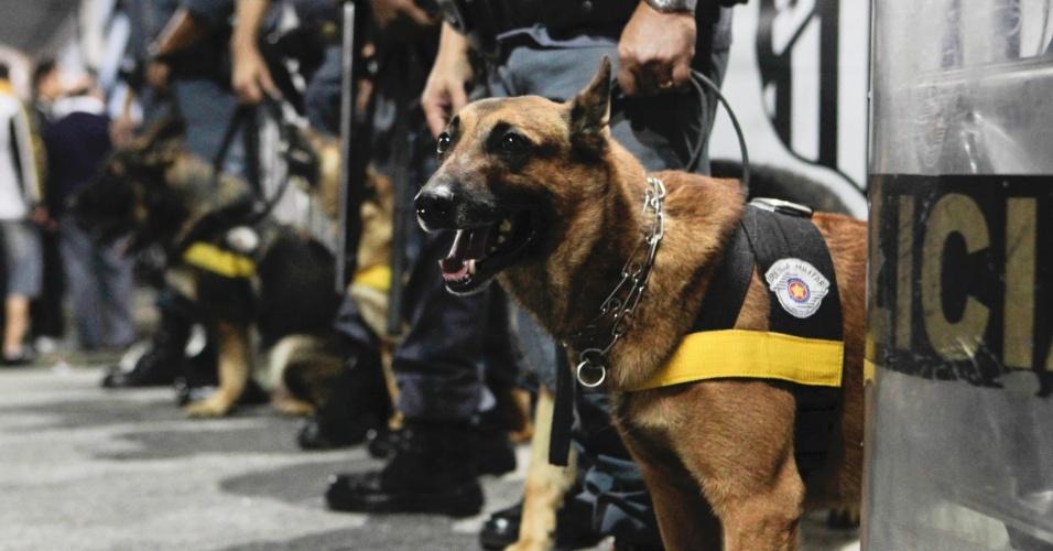 Polícia tem o reforço de cães para garantir a segurança dos torcedores de Santos e Corinthians
