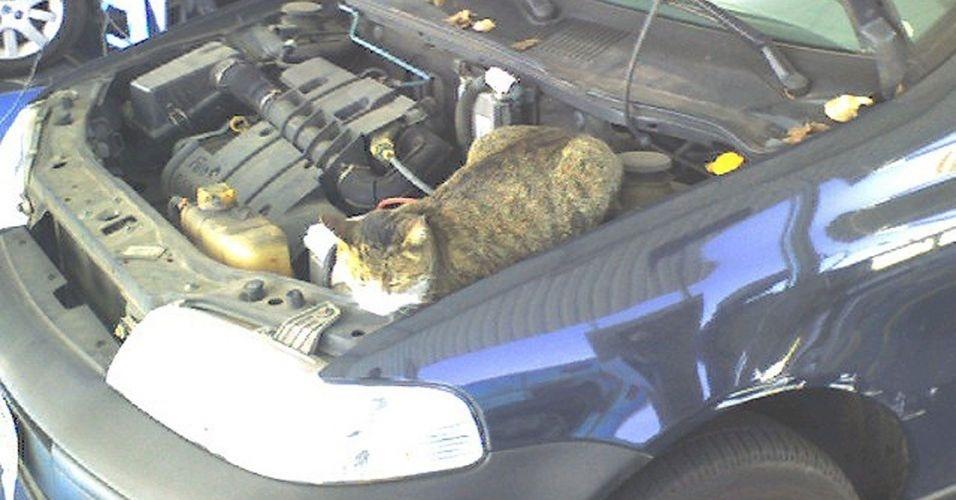 14.jun.2012 - O Editor do UOL Tabloide levou seu carro para a inspeção veicular e a equipe do local encontrou uma gata dentro do motor do Tabloidemóvel (!)