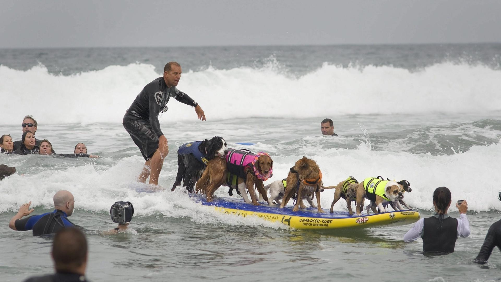 Cachorro participa de competição de surfe nos EUA
