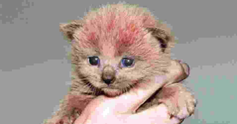 """18.jun.2012 - Você já viu a Pantera Cor-de-Rosa? Pois parece que ela deve ter existido mesmo: filhotes """"rosados"""" de gatos foram encontrados em uma fábrica do Reino Unido - Reprodução/Lee Tucker/Cats Protection"""