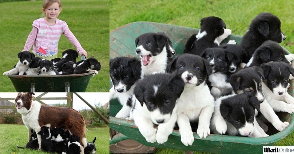19.jun.2012 - O casal inglês Zoe e Marcus Hooper tomaram um susto quando Star, a cadela deles de quatro anos, teve 14 filhotes de uma só vez na fazenda onde moram em Leominster, na Inglaterra