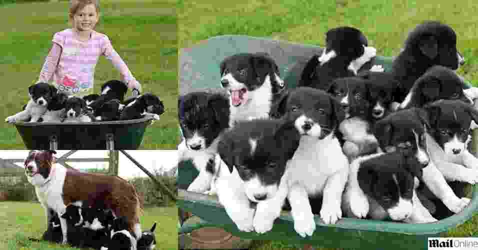 19.jun.2012 - O casal inglês Zoe e Marcus Hooper tomaram um susto quando Star, a cadela deles de quatro anos, teve 14 filhotes de uma só vez na fazenda onde moram em Leominster, na Inglaterra - Reprodução/Mail Online/Harvey Hook/HotsPot Media