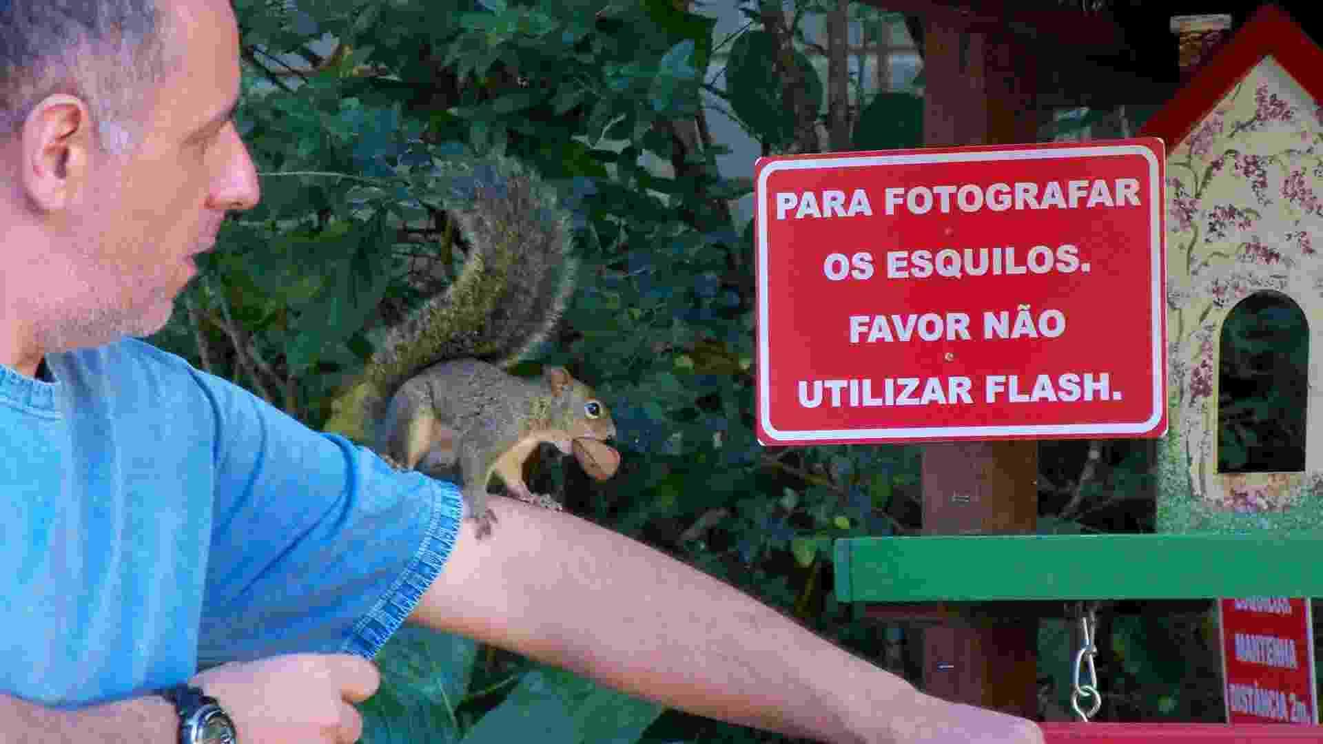 Nelson Tavares Pacheco Júnior mostra um dos esquilos que cria em Monte Verde (MG) - Divulgação