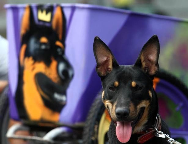 O cachorro do catador Rubens serviu de inspiração para o grafite na carroça (23/6/12) - Ricardo Cassiano/UOL