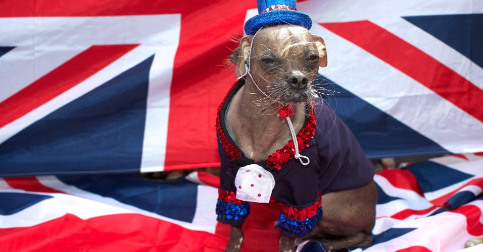 28.jun.2012 - Mugly, vencedor do concurso do cão mais feio do mundo, disputado na Califórnia, participa de sessão de fotos em Londres, (Reino Unido), nesta quinta-feira (28). O animal de oito anos de idade vive na Inglaterra