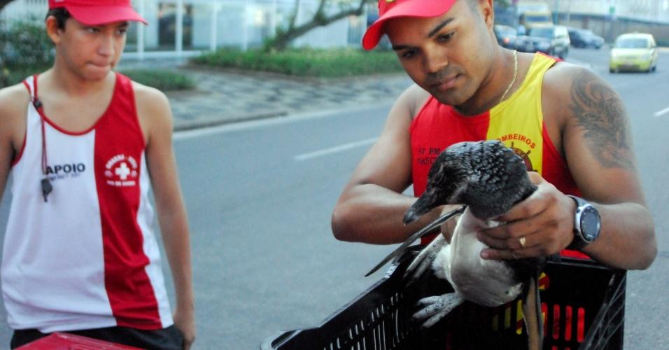 1.jul.2012 - Bombeiros do Gmar (Grupamento Marítimo) resgataram neste domingo um pinguim na praia de Ipanema, zona sul do Rio de Janeiro (RJ), e o encaminham para o zoológico do Rio de Janeiro