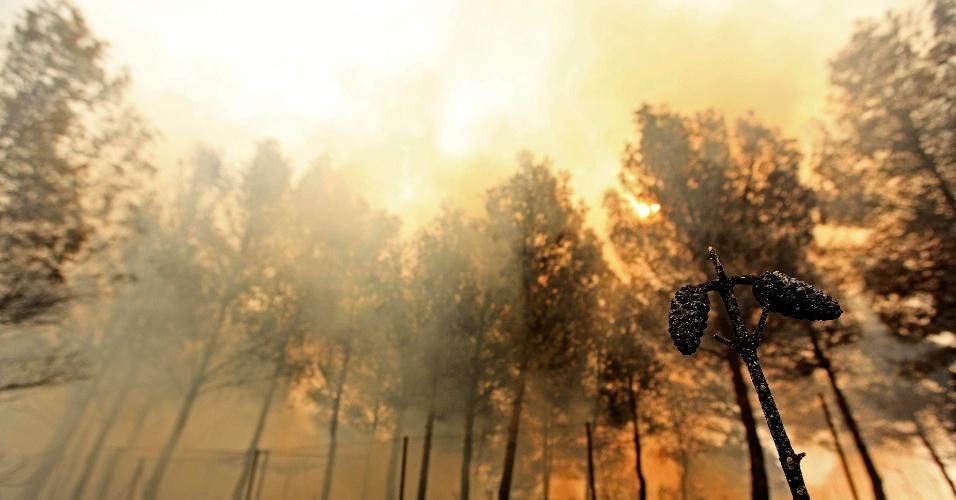 1º.jul.2012 - Incêndios arrasam milhares de hectares de florestas em Valência (Espanha); as chamas já desalojaram mais de mil pessoas na região