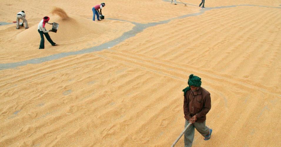 1.jul.2012 - Trabalhadores espalham o trigo para secar em mercado na cidade de Chandigarh, norte da Índia, em foto de 16 de abril de 2012 divulgada neste domingo (1)